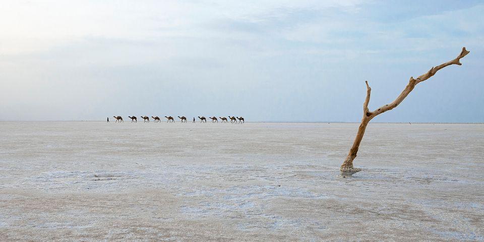 La carovana di sale nel deserto di Danakil in