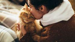 Siete dei veri amanti dei gatti? Ecco il lavoro che fa per