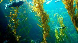 Carburante pulito dal mare? È realtà, con le