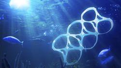 Our Ocean, milioni di euro europei per fermare il mare di
