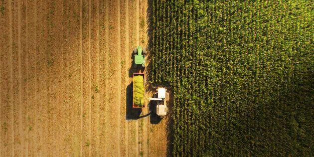 L'Italia non deve sacrificare al G7 la propria agricoltura sull'altare