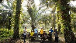 5 cose da sapere sugli smallholders, i lavoratori delle piantagioni di Olio di