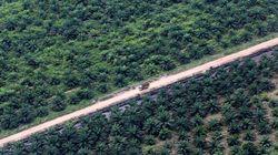 Boicottare l'olio di palma non serve. Apriamo un dibattito etico per una produzione