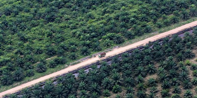 An aerial view of an oil palm plantation in Musi Banyuasin Regency, South Sumatra, Indonesia/via