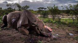 Il rinoceronte mutilato è la foto simbolo della natura che ha vinto il