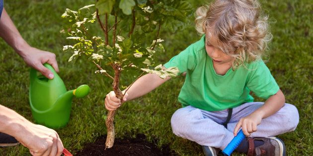 Small boy planting tree in garden, sitting on
