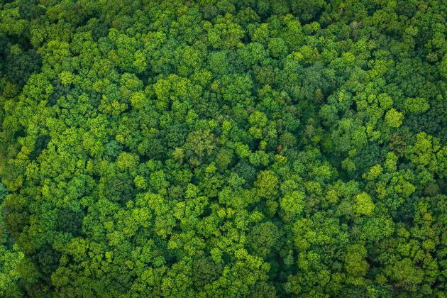 Aerial view down onto vibrant green forest canopy with leafy