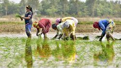 Un'agricoltura senza