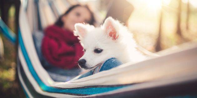 La gente davvero ama di più i cani delle altre persone. È scientificamente