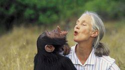 Da Jane Goodall a tutto il