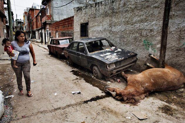 Buenos Aires, 2015. A villa Lugano un cavallo è stato ucciso durante la notte in uno scontro a fuoco...