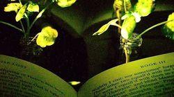 Il Mit vuole sostituire i lampioni delle strade con delle piante luminose (e anche noi, in casa, potremmo