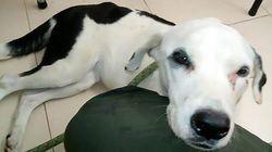 Abbandonato all'aeroporto per un mese: questo cane è morto di