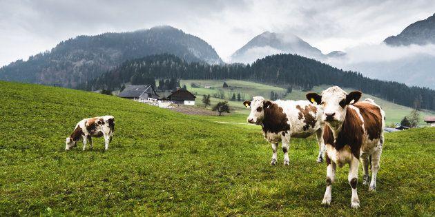 Dopo 16 anni la Cina rimuove il bando sulla carne bovina