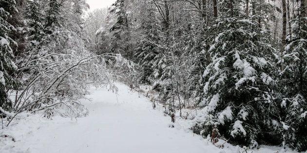Ondata di neve al Nord. 80 cm in Trentino, rischio valanghe sulle Alpi
