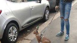 Caccia al proprietario del caracal guinzaglio. L'allarme del Comune di Milano: