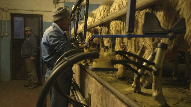 """""""Lorello e Brunello"""" e la Maremma dei pastori lontano dai riflettori. Di chi lavora e basta senza mai..."""