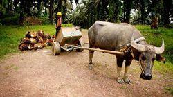 Un aiuto per gli smallholders dalle Nazioni Unite per