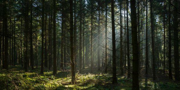 Trovato un cadavere incappucciato e legato a un albero in un bosco del
