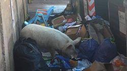 L'Abruzzo dice sì a rifiuti di Roma: saranno trasferiti per 90 giorni. Giorgia Meloni pubblica su Facebook la foto di un maia...