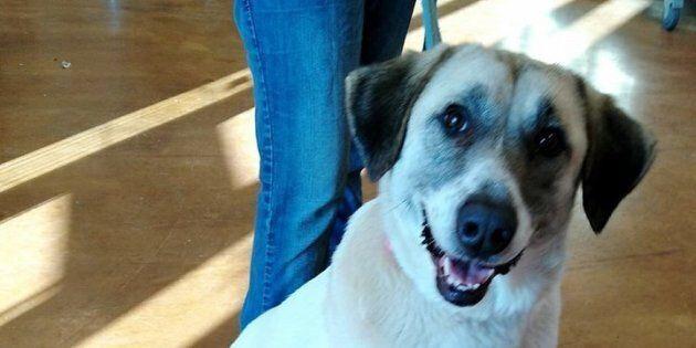 Questa cagnolina ha percorso per due volte 32 km per tornare dalla famiglia che l'ha