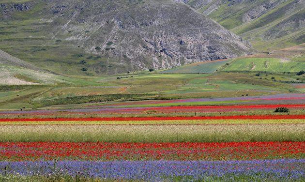 Italia - Castelluccio - La straordinaria fioritura delle lenticchie in Val Nerina. Uno spettacolo unico...