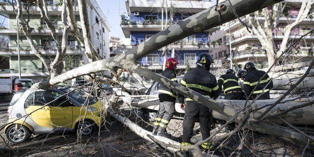 I Vigili del fuoco intervengono in Via Manlio Gelsomini in seguito alla caduta di un albero, Roma, 17...
