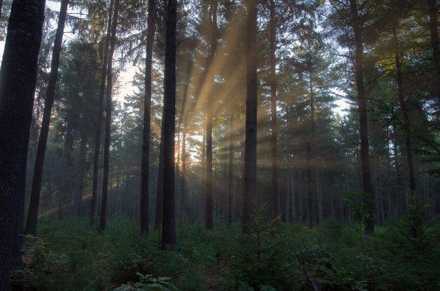 27 anni da eremita nei boschi:
