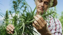 Tuteliamo la salute dei cittadini eliminando i pesticidi, come in