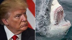 Trump dichiara di aver paura degli squali e le associazioni per la loro salvaguardia ricevono donazioni a suo
