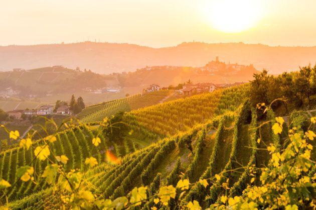 Barolo wine region, Langhe, Piedemont, Italy. Vineyards in