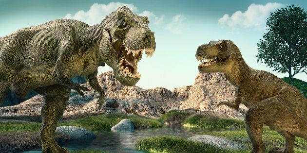 Anche i dinosauri avevano la