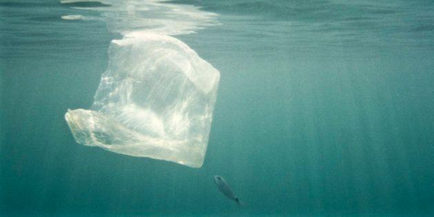 Siamo inquinatori