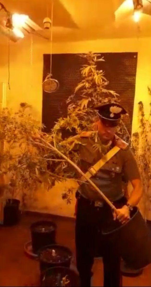 A Roma dei carabinieri vanno a sedare una lite in famiglia e scoprono una piantagione di
