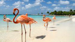 Un resort di lusso delle Bahamas e il lavoro ideale: