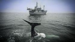 Sea Shepherd e la guerra per il