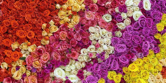 M'ama non m'ama: i petali volano tra le stradine di Poggio