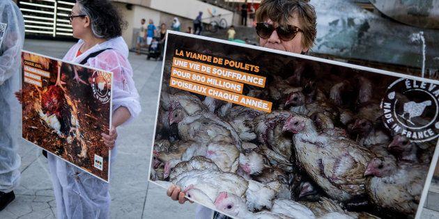 I macellai francesi scrivono al ministro dell'Interno Colombo: