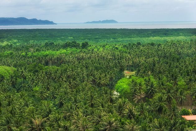 Olio di palma sostenibile, un obiettivo