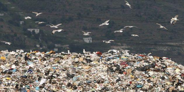 Gabbiani in volo sulla discarica di rifiuti ad Acerra, Napli, 4 giugno 2007. In Campania anche gli animali...