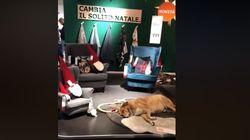 Ikea ha aperto il suo negozio per ospitare i cani randagi nei giorni di forte