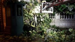Ogni temporale fa strage di alberi a Roma. Colpita garitta del Quirinale, carabiniere