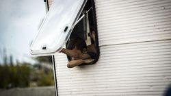 A Roma bimba nomade ferita con un colpo di pistola ad aria compressa. Raggi e Zingaretti: