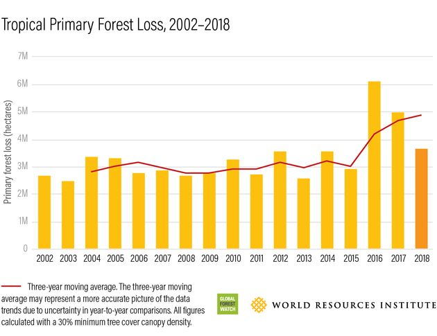 The worst years for tropical primary forest loss since 2002 were in 2016, 2017 and 2018, according to...