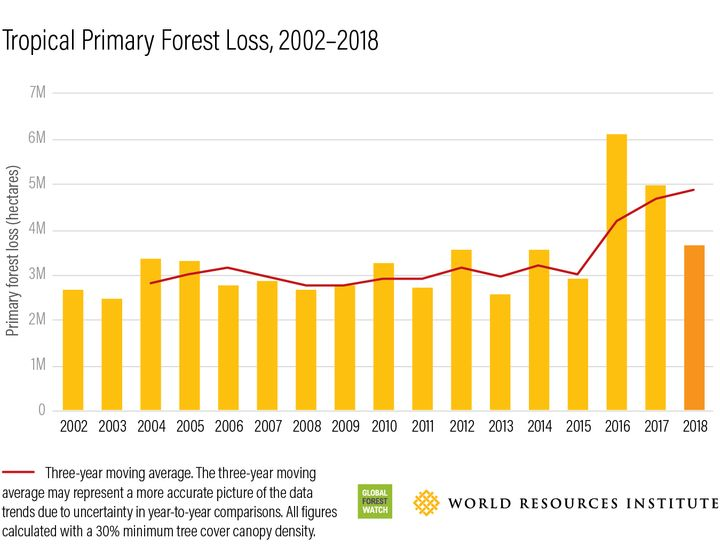 The worst years for tropical primary forest loss since 2002 were in 2016, 2017 and 2018, according to the Global Forest Watch