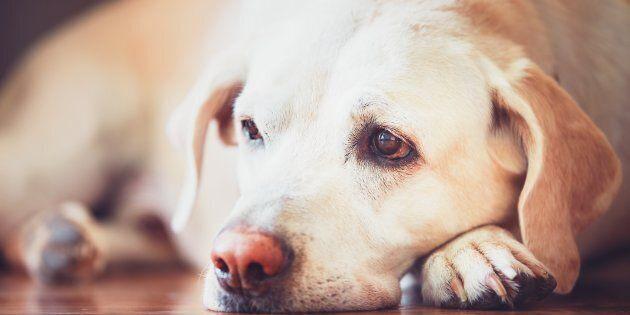Gli animali domestici possono soffrire per un lutto. Ecco cosa c'è da  sapere   L'HuffPost