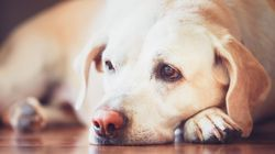 Gli animali domestici possono soffrire per un lutto. Ecco cosa c'è da