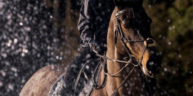 Un uomo di Ivrea è stato trovato ubriaco a cavallo. I poliziotti gli sospendono la patente di