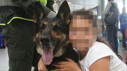 Su questo cane antidroga i narcos hanno messo una taglia di 200 milioni di