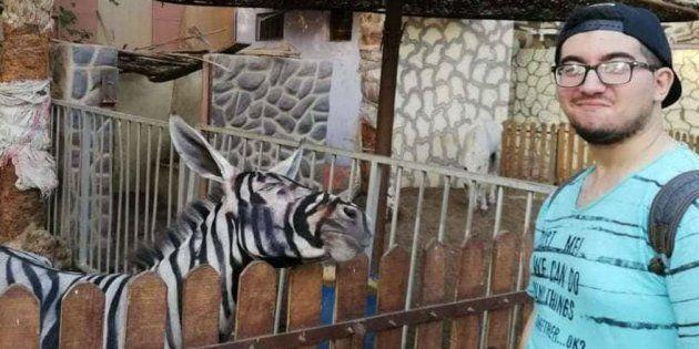 Uno zoo del Cairo è accusato di aver dipinto un asino per